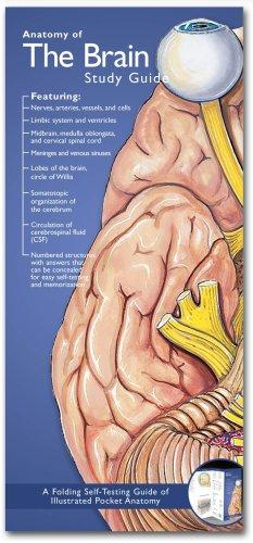 Download Anatomical Chart Company's Illustrated Pocket Anatomy